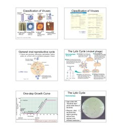 viruses viruses viruses are small packages of genes pages 1 10 text version fliphtml5 [ 1391 x 1800 Pixel ]