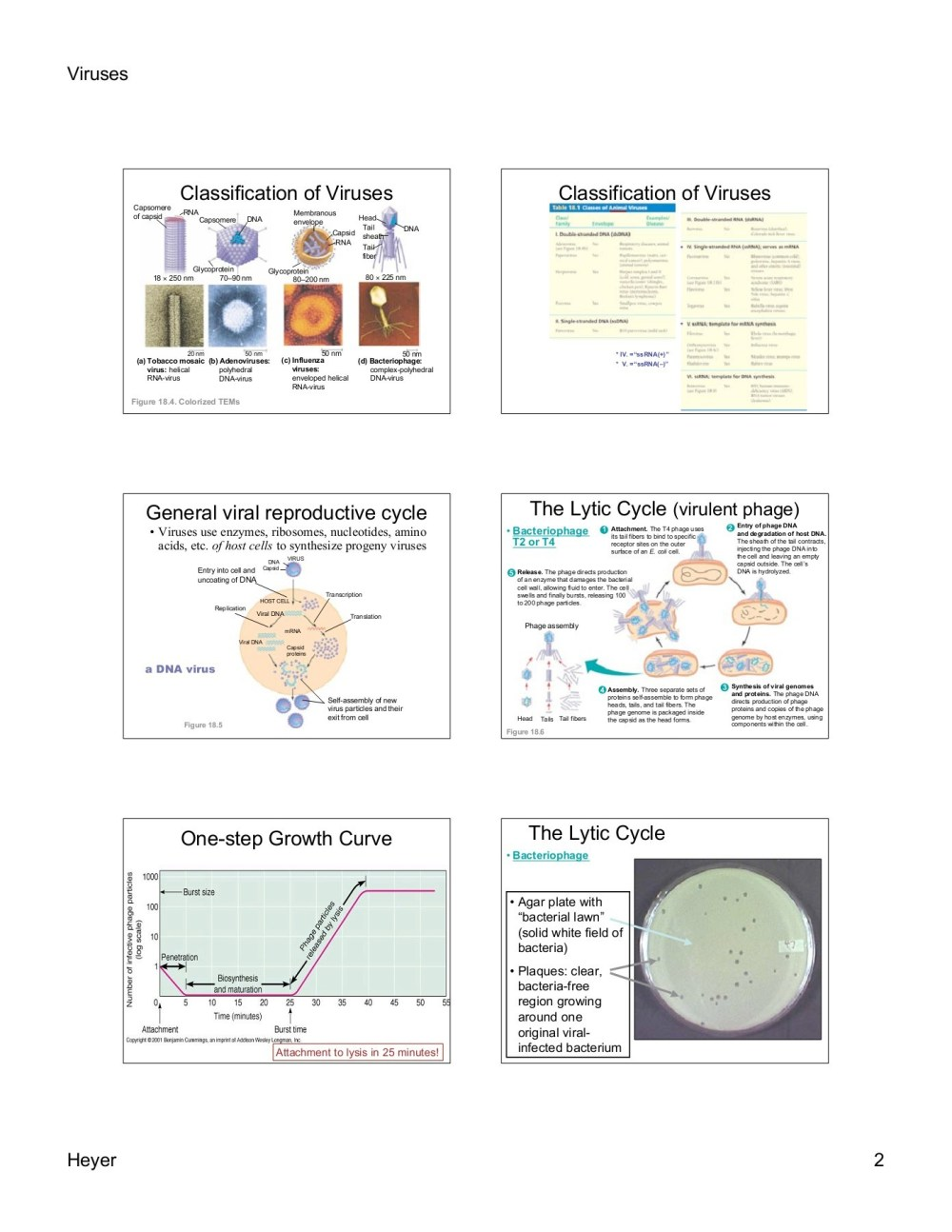 medium resolution of viruses viruses viruses are small packages of genes pages 1 10 text version fliphtml5