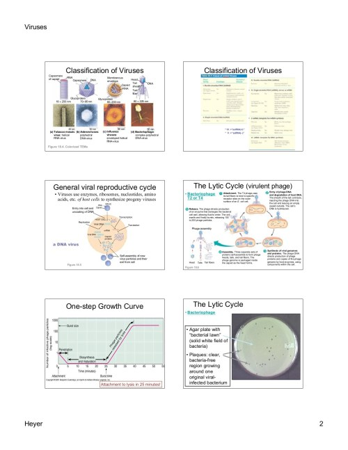 small resolution of viruses viruses viruses are small packages of genes pages 1 10 text version fliphtml5