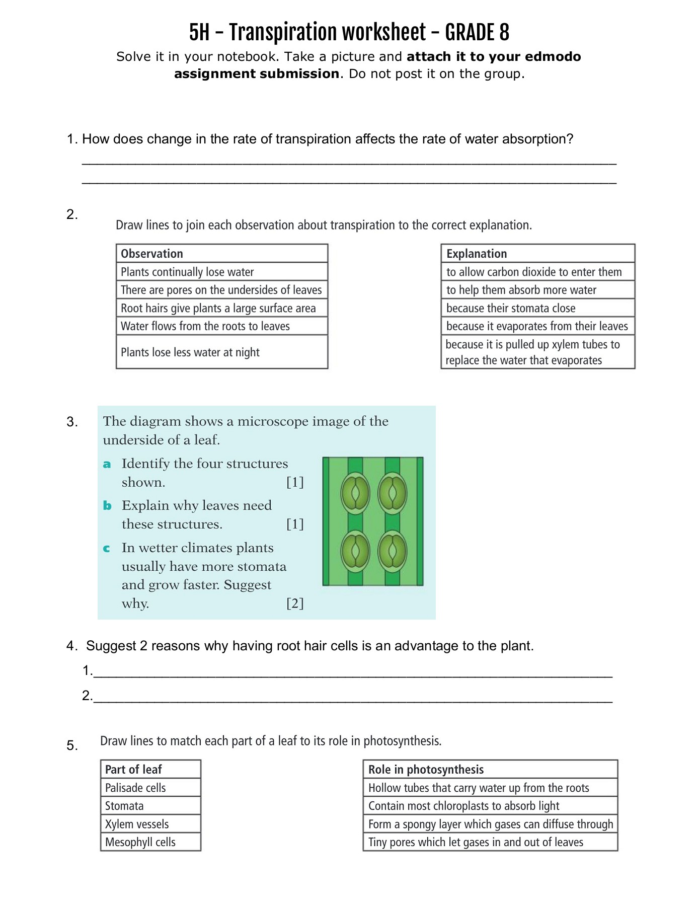 hight resolution of 5H - Transpiration worksheet - GRADE 8