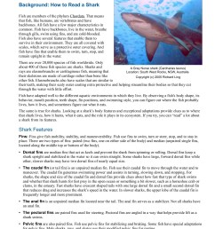 student master how to read a shark estuaries noaa gov pages 1 5 text version fliphtml5 [ 1391 x 1800 Pixel ]