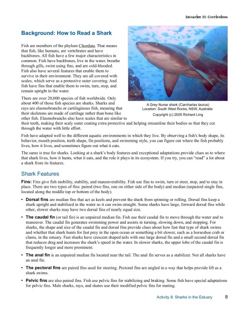 small resolution of student master how to read a shark estuaries noaa gov pages 1 5 text version fliphtml5