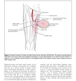 medial circumflex artery flap final wordpress com pages 1 6 text version fliphtml5 [ 1391 x 1800 Pixel ]