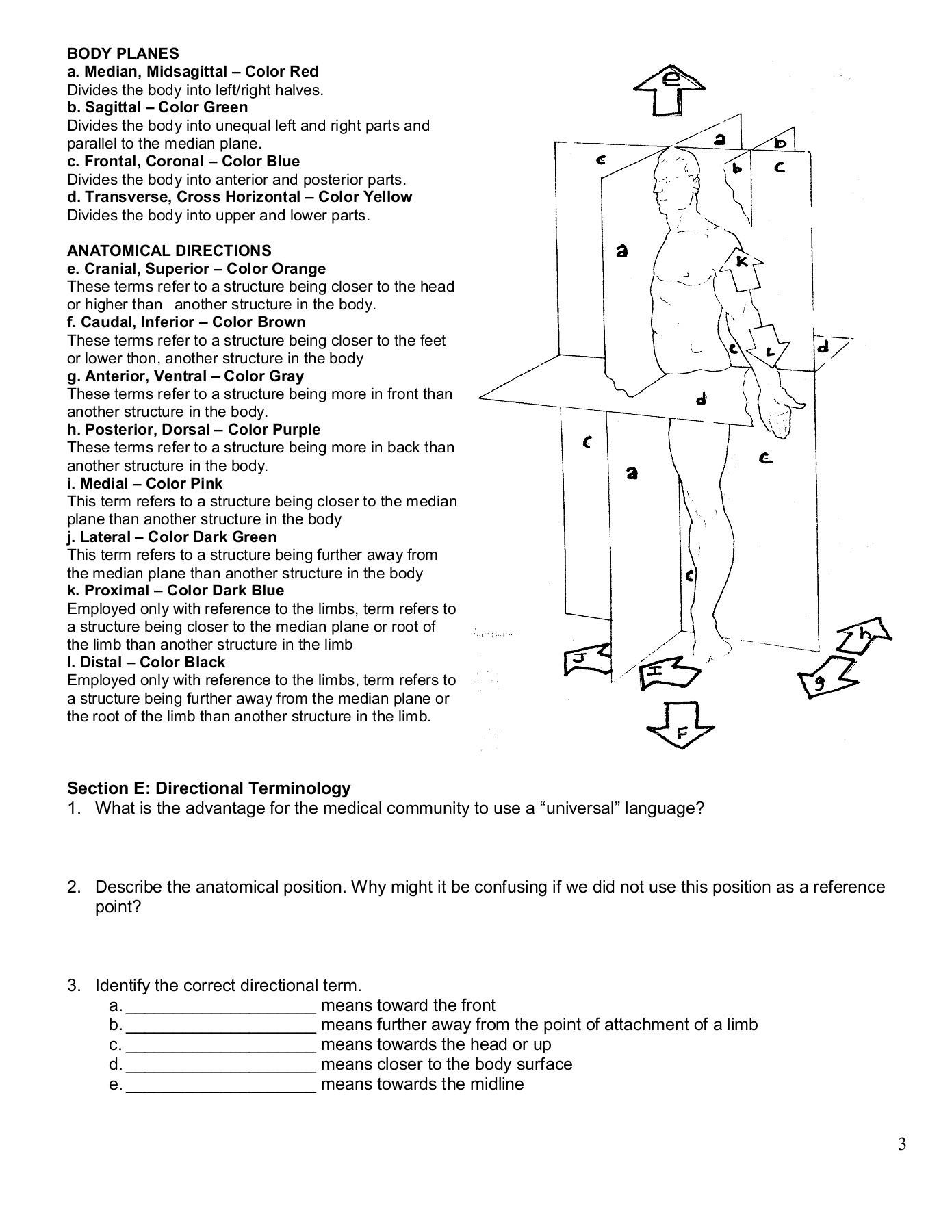 The Language Of Anatomy Worksheet Answers