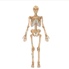 Names Of Bones In Human Skeleton Diagram 7 Pin Trailer Wiring Harness The Science Quiz
