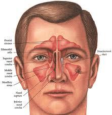 sinus是什么意思