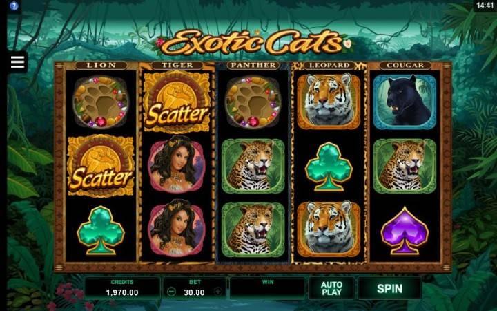 Exotic Cats, Kockanje, online casino bonus