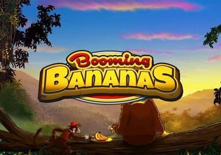 Booming Bananas nas vodi u oazu punu bonusa!
