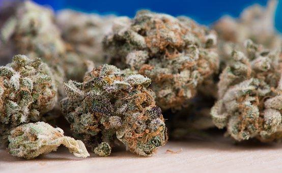 How Cannabis Kills Cancer Cells 1