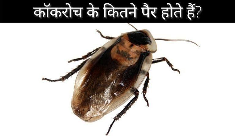 कॉकरोच के कितने पैर होते हैं? Cockroach Ke Kitne Pair Hote Hain?