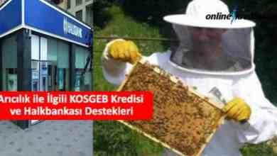 Photo of Arıcılık ile İlgili KOSGEB Kredisi ve Halkbankası Destekleri