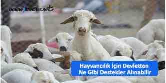 hayvancılık teşvikleri