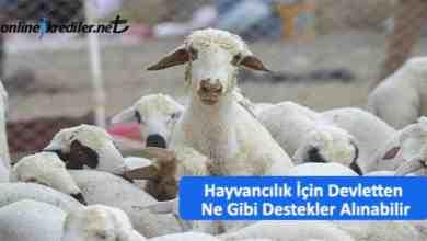 Photo of Hayvancılık İçin Devlet Teşvikleri ve Destekleri