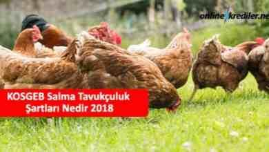 Photo of KOSGEB Salma Tavukçuluk Şartları Detaylar 2021