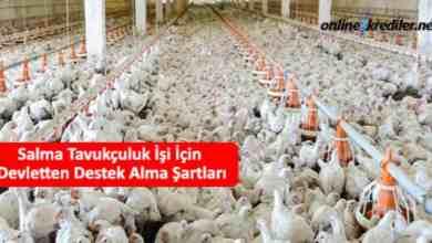 Photo of Salma Tavukçuluk İşi İçin Devletten Destek Alma Şartları