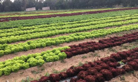 Qatar Airways Partners with QADCO to Support Food Security in Qatar
