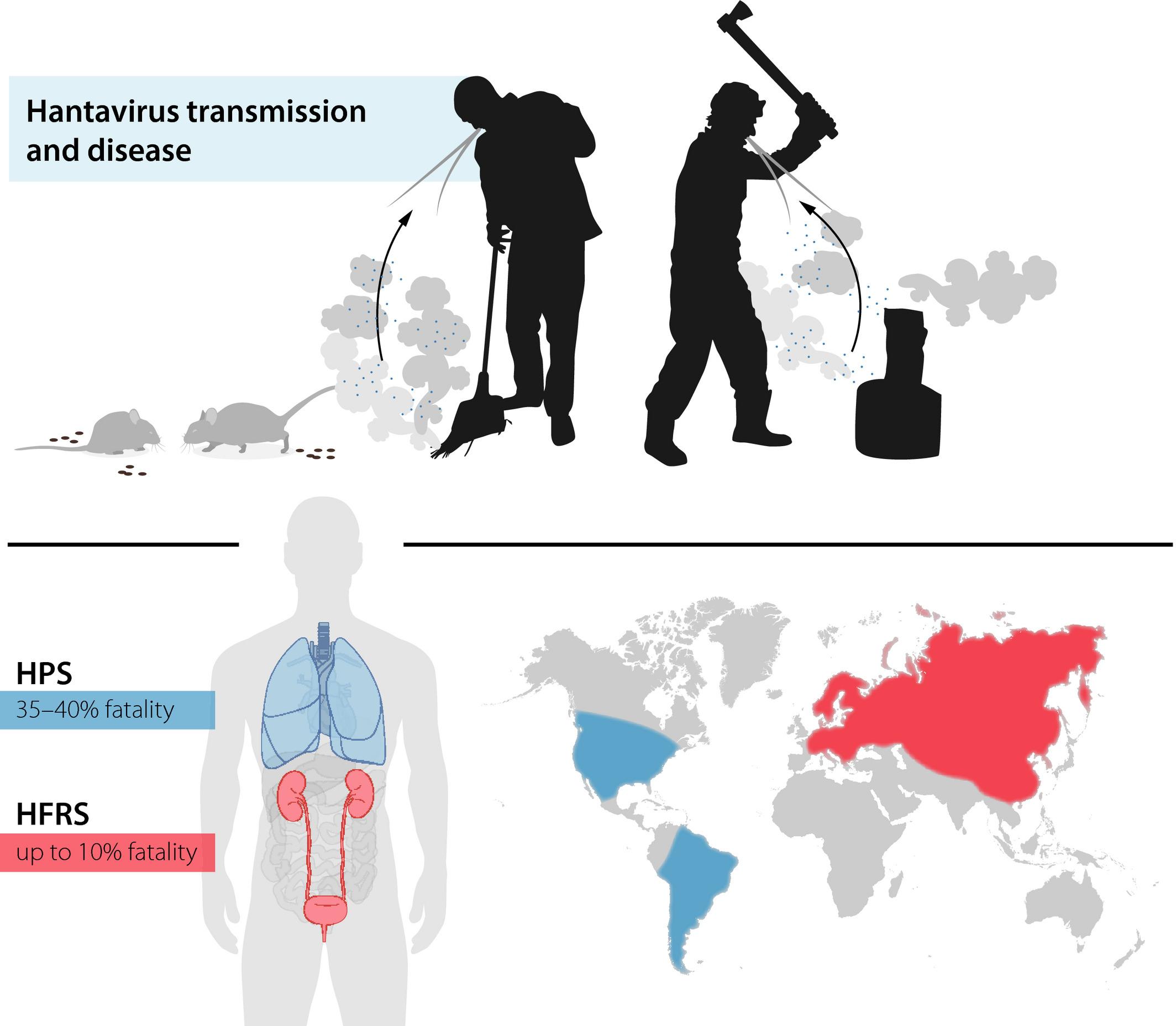 Innate and adaptive immune responses against human Puumala virus ...