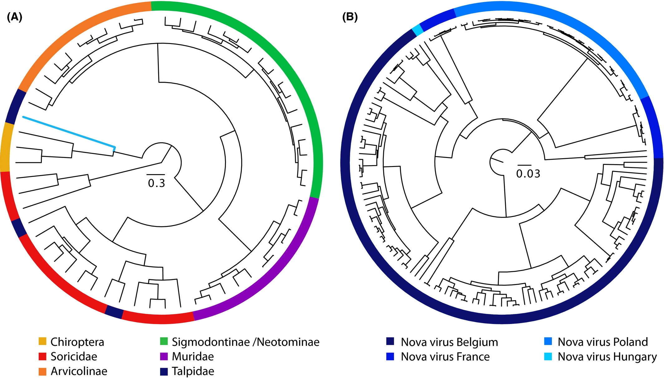 Spatio‐temporal analysis of Nova virus, a divergent hantavirus ...