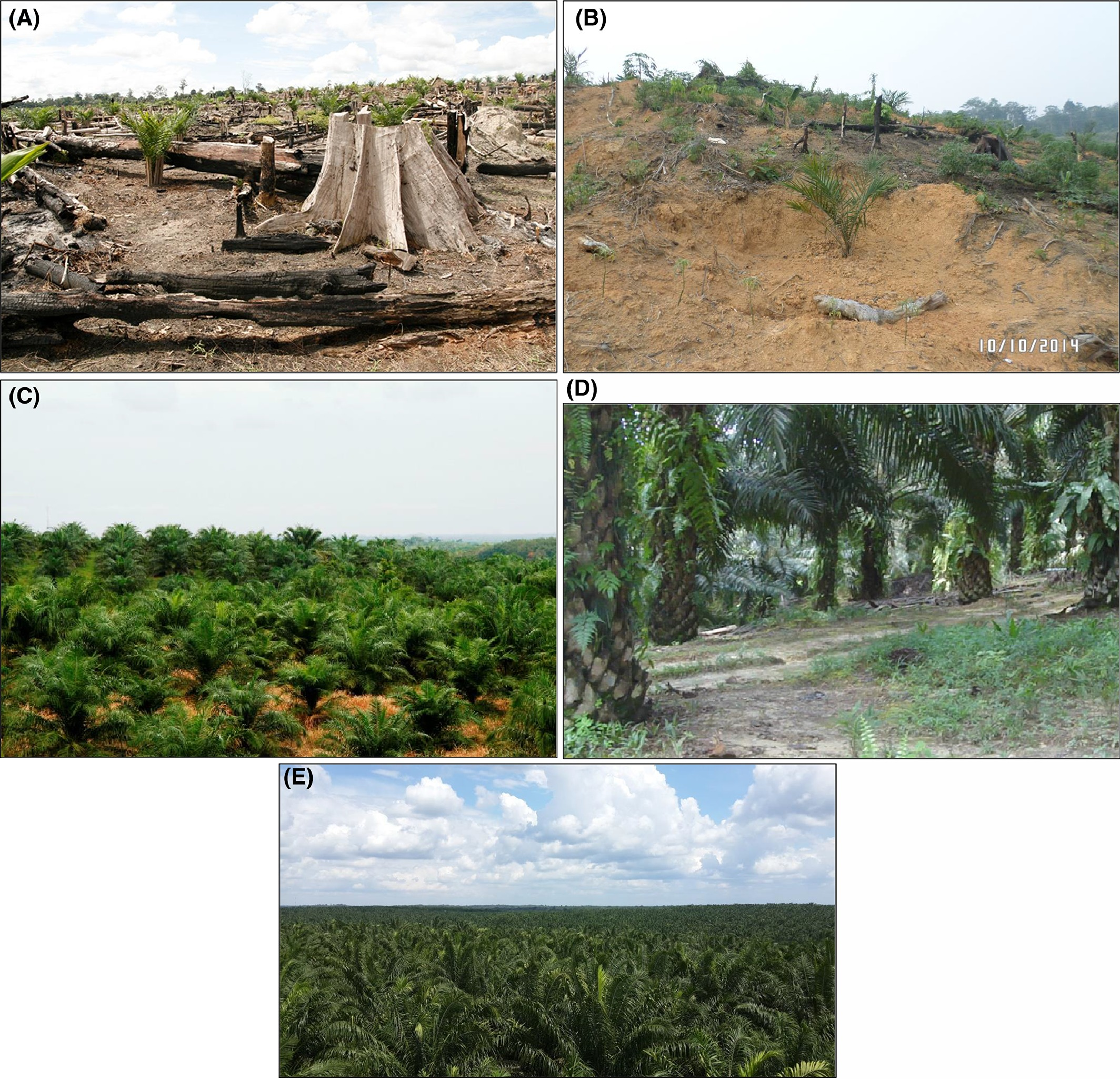 Choice of black angus roast beef, black forest ham, and smoked turkey on baguette with spring mix and tomatoes or harvest chicken salad and turkey cobb sandwiches. A Review Of The Ecosystem Functions In Oil Palm Plantations Using Forests As A Reference System Dislich 2017 Biological Reviews Wiley Online Library