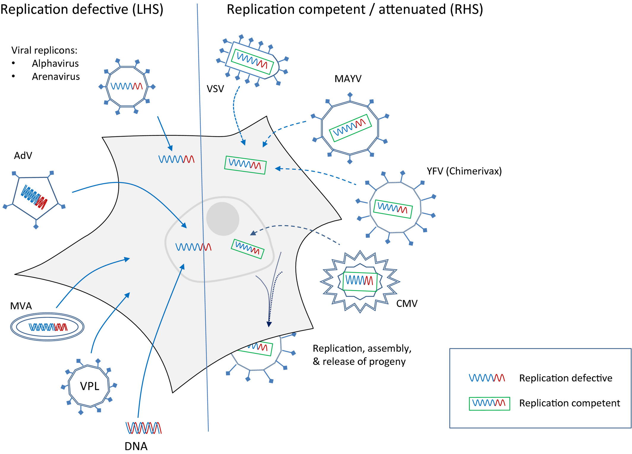 Emerging viruses and current strategies for vaccine intervention ...