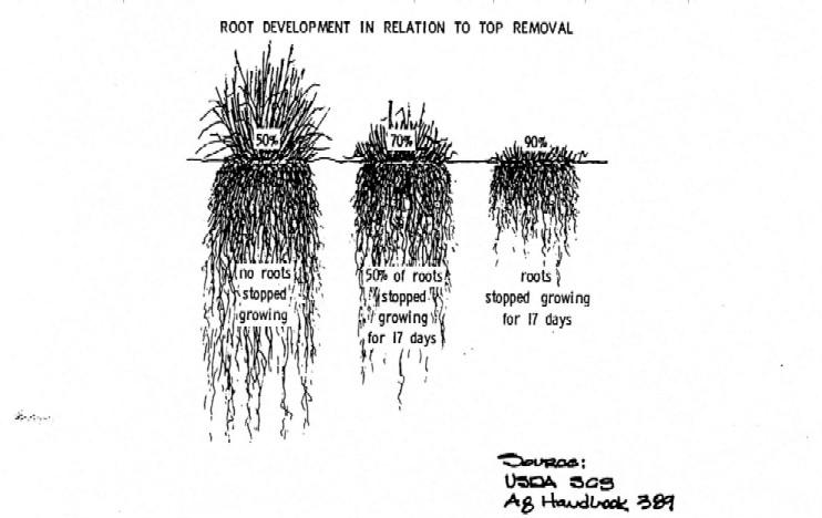 Roadside Vegetation Management Manual: Other Precautions