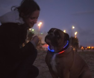 Buddy: Der Fitness-Tracker für Vierbeiner