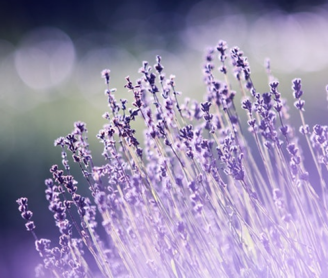 This Example Resizes A Png Pic Of Purple Flowers From 600xx133 Pixels In Width