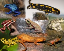 Characteristic features of class Amphibia Online Science