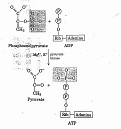 glycolysis or emp embden meyerhof parnas pathway [ 1516 x 1547 Pixel ]