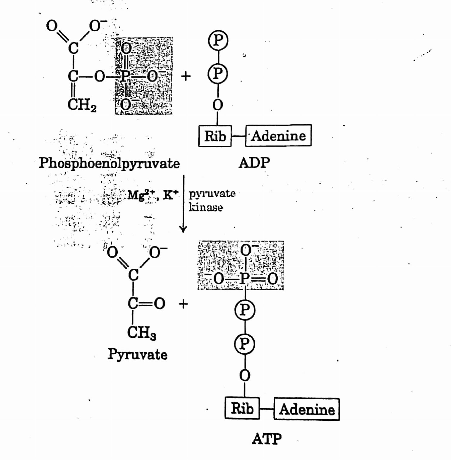 hight resolution of glycolysis or emp embden meyerhof parnas pathway