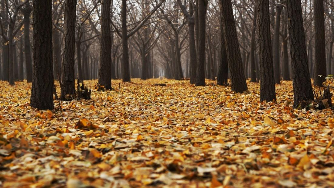 autumn-1869426_1920