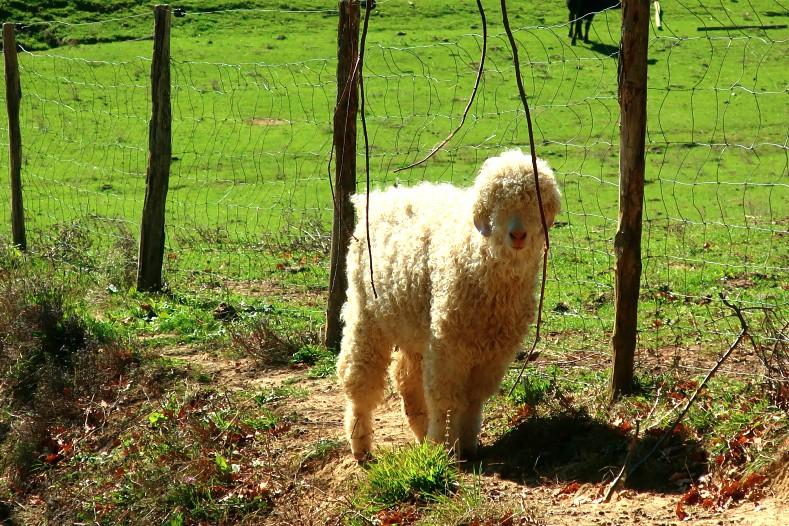blog toulouse lifestyle animal