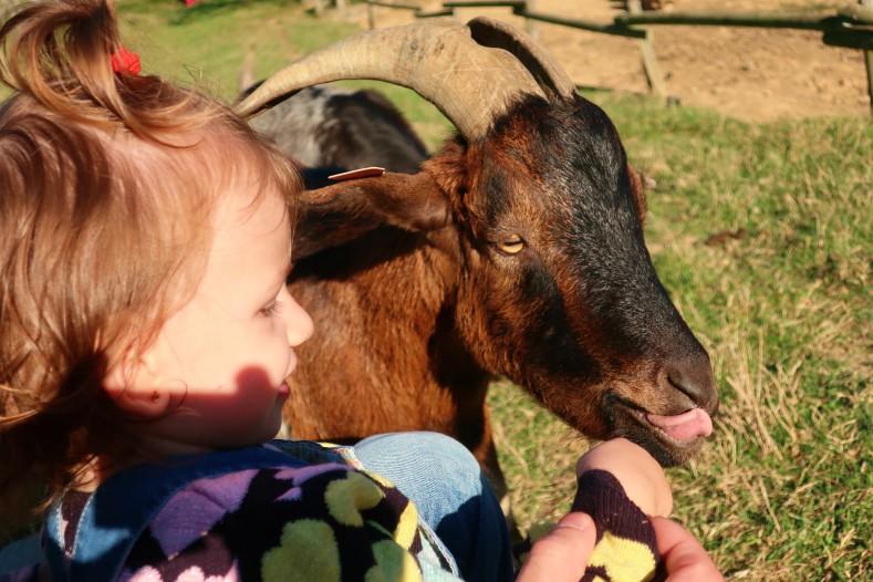 blog lifestyle toulouse bébé et animal