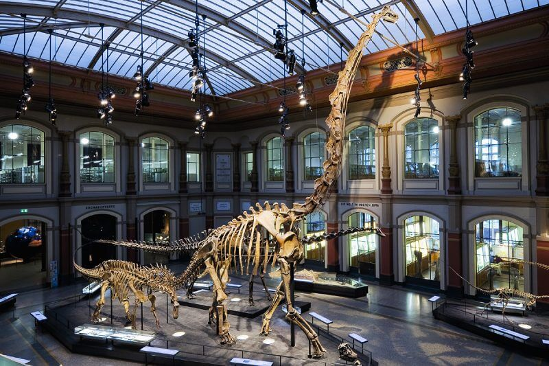 150616130211-dino-museums-museum-fur-naturkunde-berlin-800x533-1.jpg