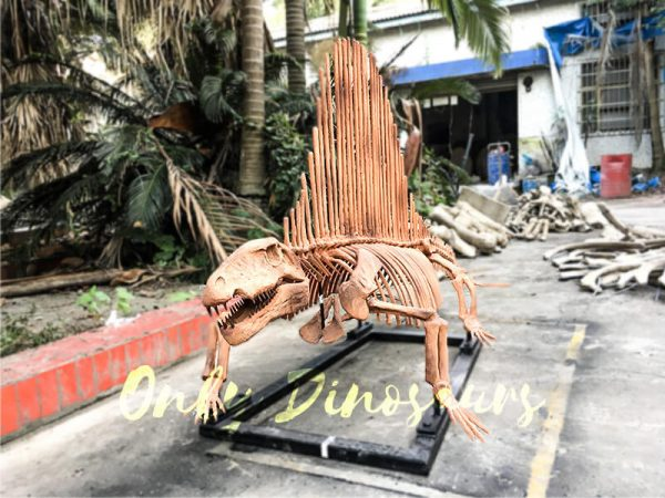 2 Meters Full Dinosaur Fossil Dimetrodon Skeleton for Exhibition3 2