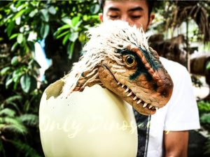 Adorable Hairy Baby Dinosaur in Eggshell