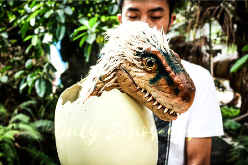 Adorable Hairy Baby Dinosaur in Eggshell1 1