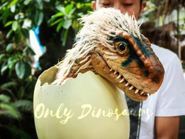 Adorable-Hairy-Baby-Dinosaur-in-Eggshell1-2