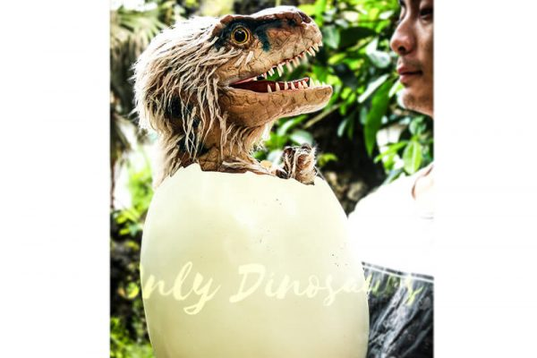 Adorable Hairy Baby Dinosaur in Eggshell3 1
