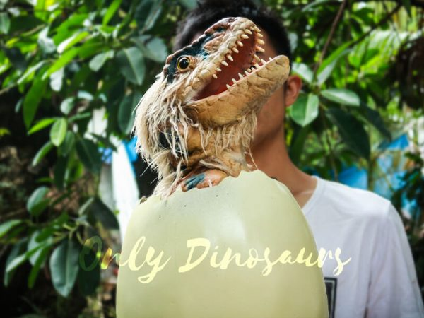 Adorable-Hairy-Baby-Dinosaur-in-Eggshell4-2