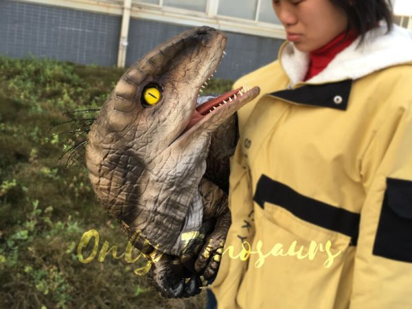Awesome-Baby-Velociraptor-Puppet-with-Feathers5-2