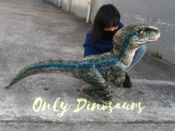Baby-Blue-Velociraptor-Puppet-from-Jurassic-World1-2