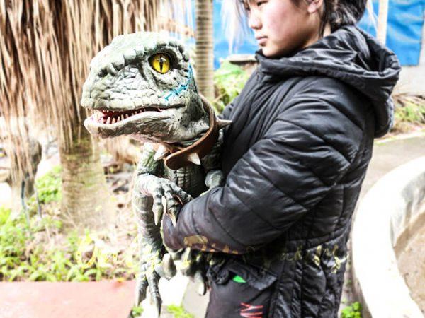 Baby-Velociraptor-Dinosaur-Puppet-for-Kids1-2