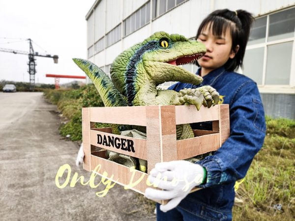 Baby Velociraptor Puppet in Crate3 1
