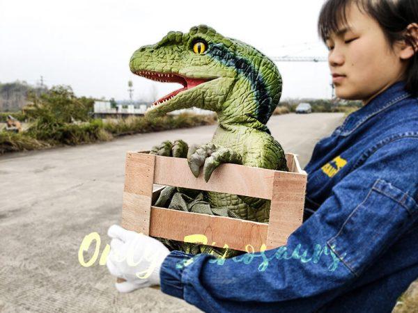 Baby Velociraptor Puppet in Crate4 1