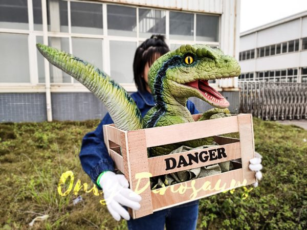 Baby Velociraptor Puppet in Crate5