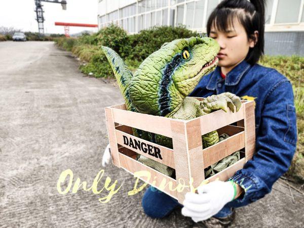 Baby Velociraptor Puppet in Crate6