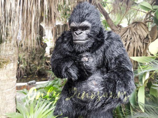 Exhibition-Props-Realistic-Gorilla-Costume1-2
