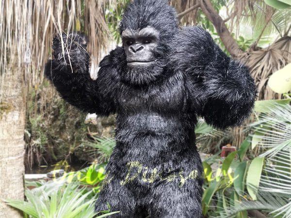 Exhibition Props Realistic Gorilla Costume8