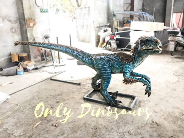 Feathered Blue Animatronic Velociraptor Customized Dinosaur2